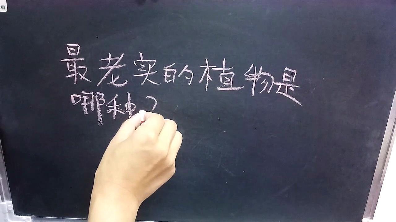 老师提了个问题:最老实的植物是哪种?明白人都可以猜到