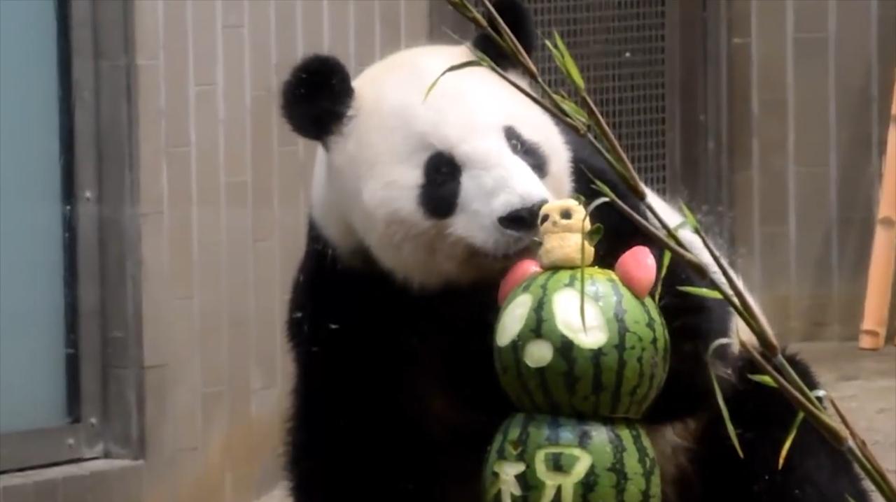 中国台北动物园,为大熊猫