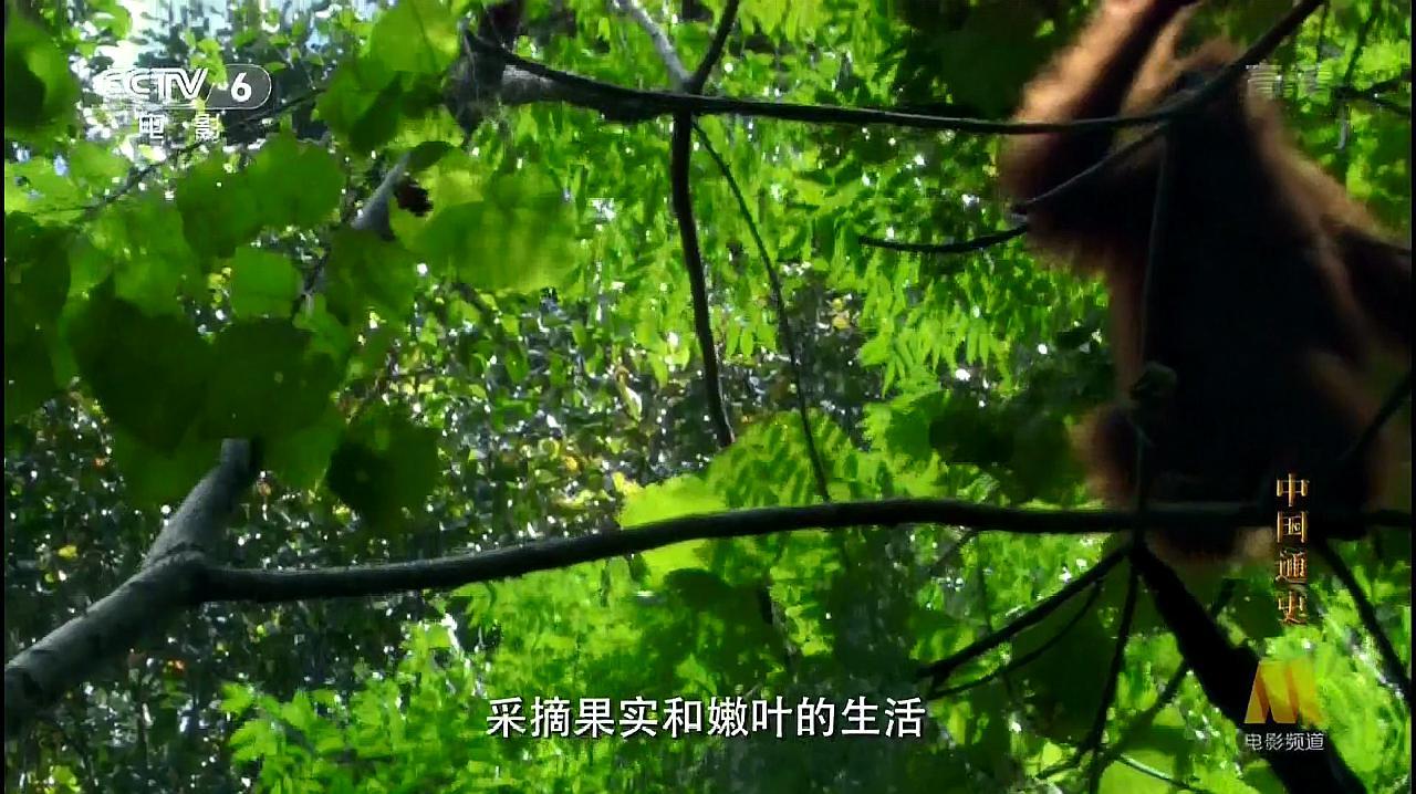 中国通史:与人类最接近的生物,竟然出自我们中国!