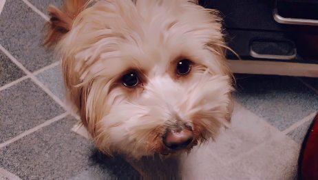 狗狗睁着水汪汪的小眼睛,都到底在看什么?