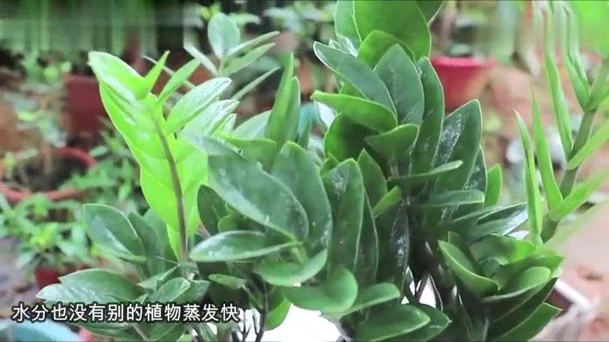 家里再穷也要养这3种花,客厅放什么植物最好能转运!涨见识了