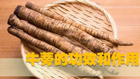 懂得养生  :牛蒡茶的功效与作用