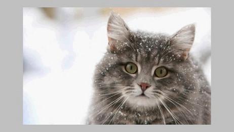 阳光下安静的猫(半音阶口琴)【空之轨迹】