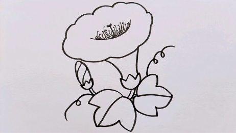 儿童简笔画牵牛花的画法