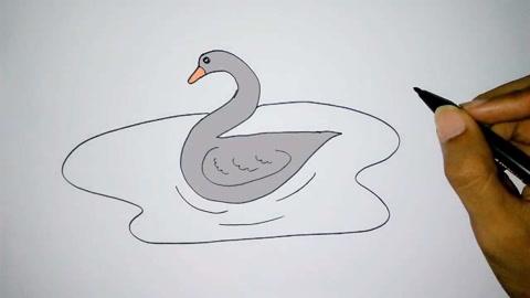 儿童宝宝学画画:简笔画天鹅!