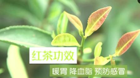 女性养生, 女性喝红茶好还是普洱茶好多喝红茶不仅降血脂暖胃还能减小女性体寒!
