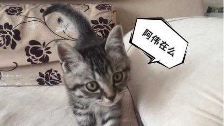 【狸花猫】小猫大战数据线究竟鹿死谁手?(结尾喵喵暴击)