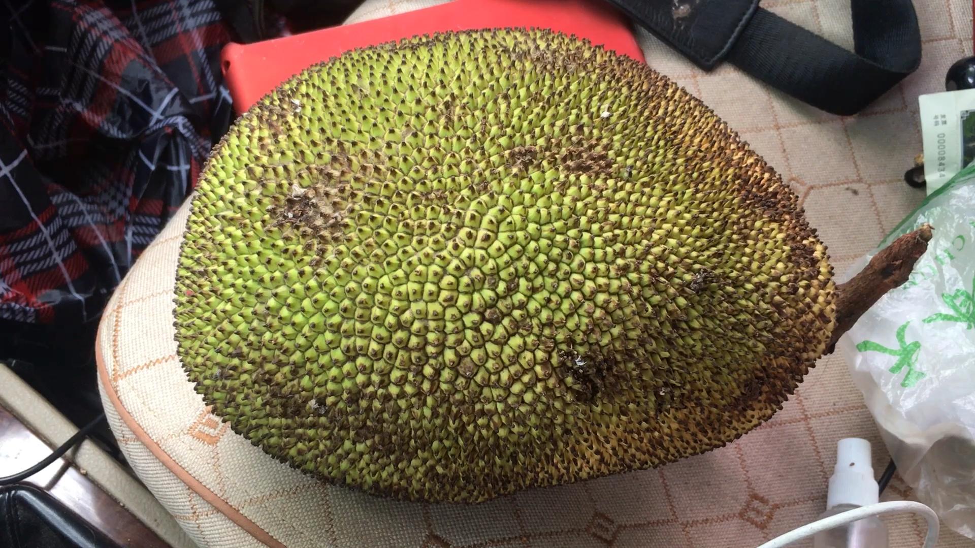 路边买个菠萝蜜,打开后是这个样子,是放坏了还是被骗了