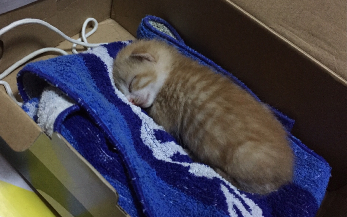 捡到一只流浪小奶猫,估计只有十多天大,眼睛还未完全睁开