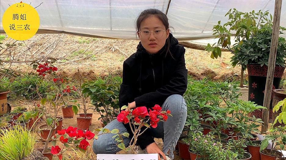 想知道更多关于叶子花的养殖知识吗?看完这个就能明白!