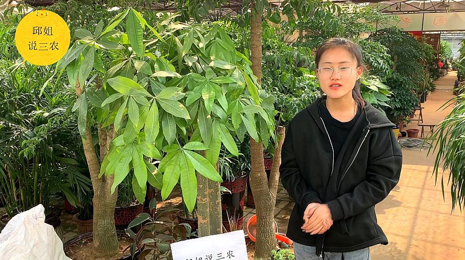 想知道更多关于发财树的养殖知识吗?看完这个就能明白!