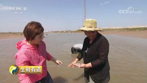 [生财有道]探寻日照特产——海沙子