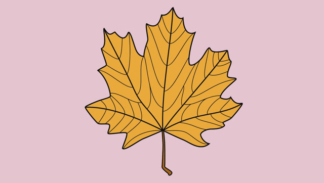 怎么画树叶简笔画图片
