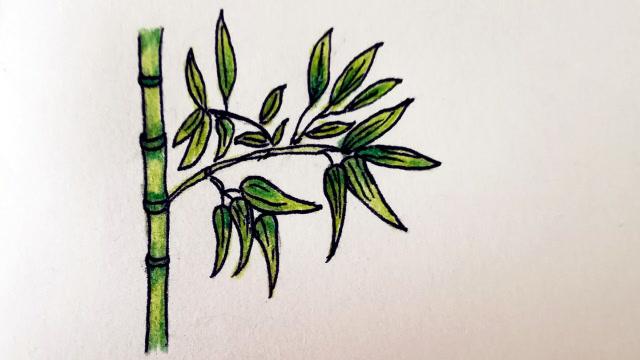 彩铅简笔画:绘制一节竹子图片