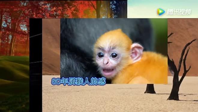属猴人的一生一世:尤其是1980年37岁的,看完谁不哭?