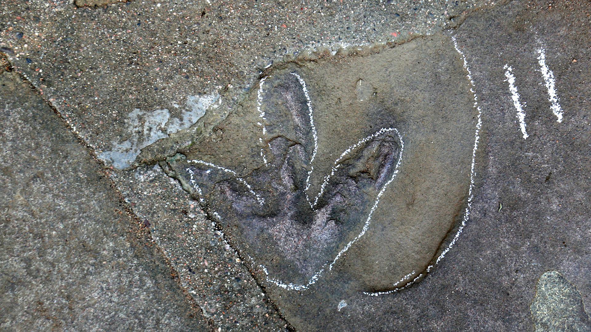 """石板路惊现大量恐龙足迹!承德避暑山庄原来竟是""""侏罗纪公园"""""""