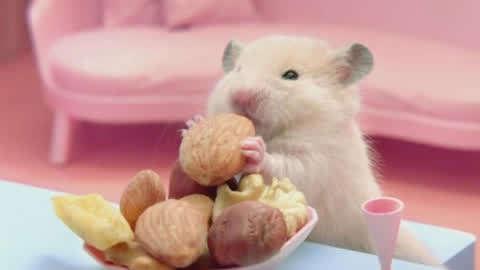 动物人生:戏精大观坐家里怀疑鸽子男孩入药生仓鼠图片
