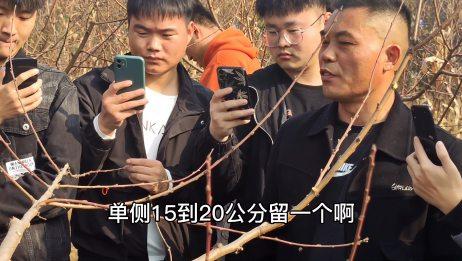 你们要的唐老师桃树冬季修剪详细讲解来了!