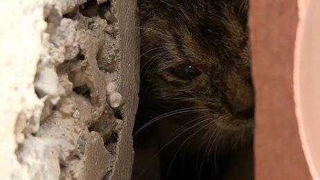 小奶猫被困在柱子里,绝望母猫用哭声求救,结局太暖了