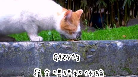 GAZN'S VLOG 2 | 寝室喂猫初体验 | 傲娇狸花猫宁吃草拒食猫粮 | 话唠妈宝