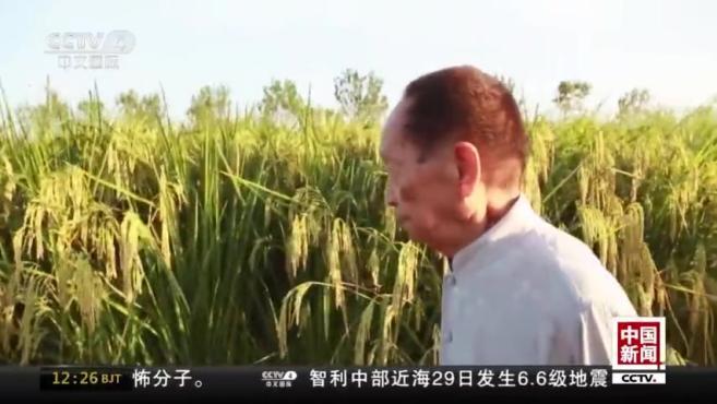 """共和国勋章获得者袁隆平:奖章很""""重"""" 要继续努力"""