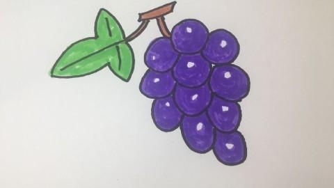 教你葡萄的画法,轻松就能上手!