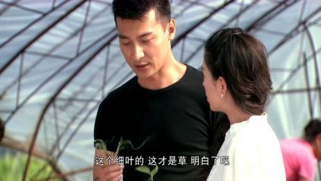 大村官:富二代女友帮村官男友干农活,谁知她竟把蔬菜苗给拔了!