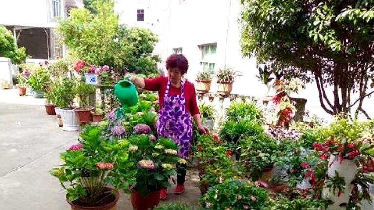 室内好养且旺财的花,家里不养一盆都可惜!