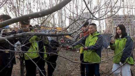 冬季桃树修剪要诀
