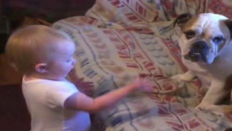 妈妈听到客厅很热闹,出来一看哭笑不得,斗牛犬正在听宝宝训话呢