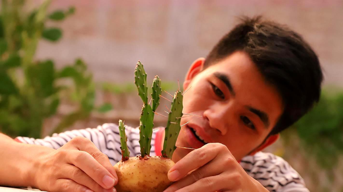 仙人掌种到土豆上,结果会如何?