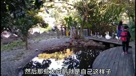 台湾的乡村风光。嫁到台湾二十多年的老菅带你看。