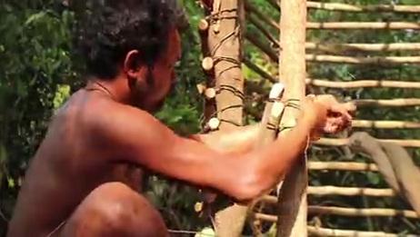 野外生存系列建立伟大的丛林叶屋