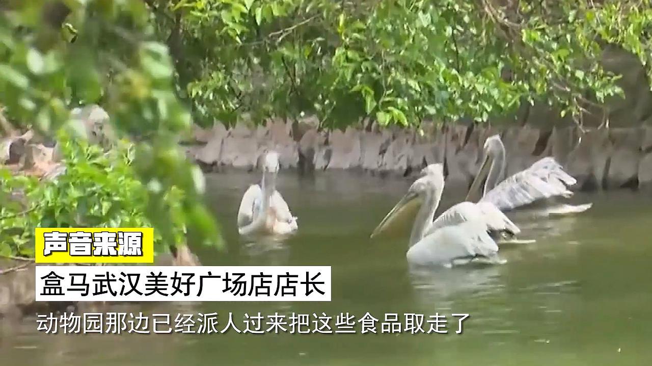 武汉动物园断粮告急,盒马出手:水鸟们有饭吃了!
