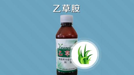 乙草胺:一种广泛应用的除草剂