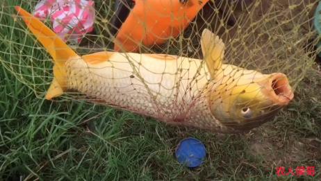 野钓鲤鱼饵料如何开制,这样开饵钓大鲤鱼不是梦,让你永远忘不掉