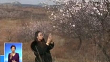 [共同关注]百花盛开 春意盎然·河南安阳 杏花绽放 春色满园