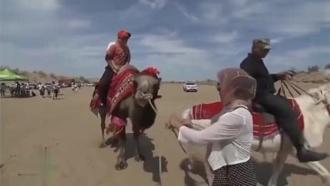 骆驼奶一公斤20元!骆驼是玛纳斯牧民的金元宝!