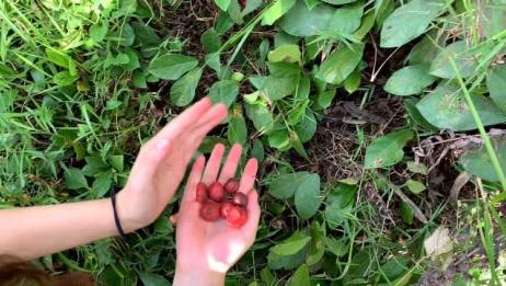发现红红的果子,农村的肯定吃过,你们那里叫什么
