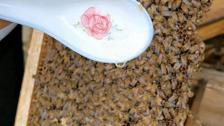 买蜂蜜追求浓度的朋友请认真看看,只要不喂糖,它就是这浓度!