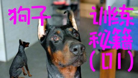 主人独创狗子训练秘籍,只需一分钟,就可以让你和狗子无障碍交流