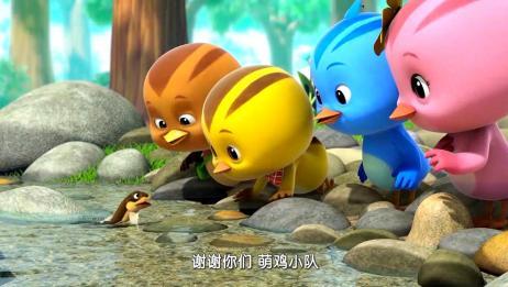 萌鸡小学堂:泥鳅回不去家,萌鸡们真热心,一起帮助小泥鳅回池塘