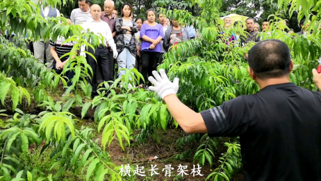 桃树开心型修剪,资深果树种植专家现场指导!