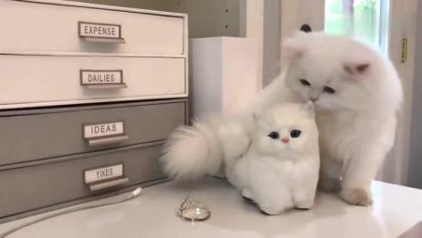 超可爱波斯猫问玩具猫:小可爱你怎么不和我玩