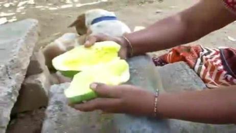 你见过芒果的这种吃法吗?猜这样吃味道如何呢?