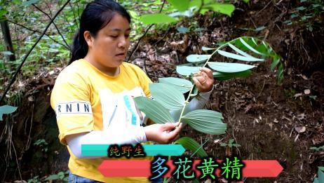 黄精今年涨价了,鲜品每公斤70元,农村姑娘寻遍大山只为找它