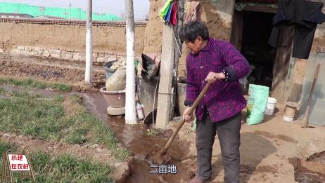 70岁农村大妈开春浇麦地,从早上忙到下午四点,中午饭都顾不上吃