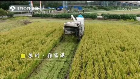 中国农民丰收节丰收画面丨南京关注