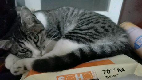 猫咪太可爱了,知道为什么猫不吃死小金鱼吗?