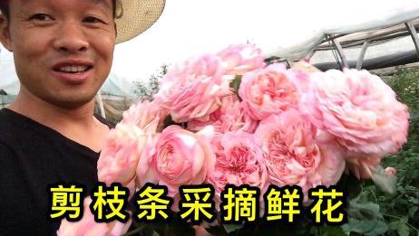 香味扑鼻的玫瑰花,田园般的生活,梦想的花园